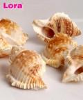 Deniz Ürünleri - 14228