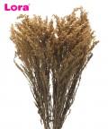 90-100 Gram Kurutulmuş Krem Solidago - 99038