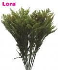 90-100 Gram Kurutulmuş Yeşil Solidago
