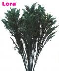 90-100 Gram Kurutulmuş Petrol Yeşili Solidago - 99040