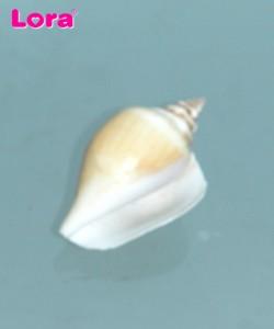 Deniz Ürünleri - 14251