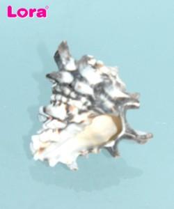 Deniz Ürünleri - 14253