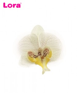 Diğer Çiçek Çeşitleri - 98807