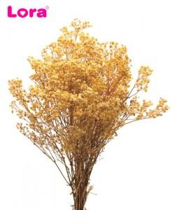 Kuru Çiçek Çeşitleri - 98944