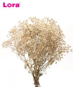 Kuru Çiçek Çeşitleri - 98950