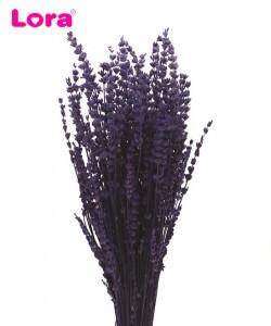 Kuru Çiçek Çeşitleri - 99027