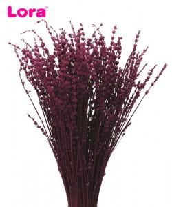 Kuru Çiçek Çeşitleri - 99029