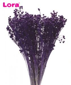 Kuru Çiçek Çeşitleri - 99031