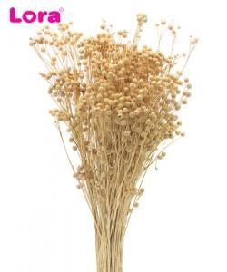 Kuru Çiçek Çeşitleri - 99034