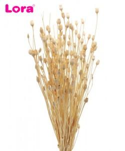 Kuru Çiçek Çeşitleri - 99046