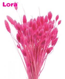 Kuru Çiçek Çeşitleri - 99047