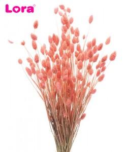 Kuru Çiçek Çeşitleri - 99048