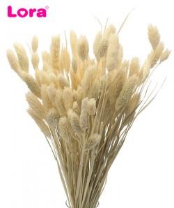 Kuru Çiçek Çeşitleri - 99050
