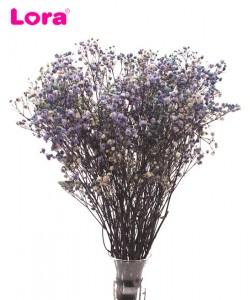 Kuru Çiçek Çeşitleri - 99065